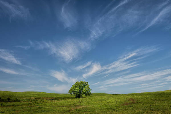 Photograph - A Celebrated Tree by Scott Bean