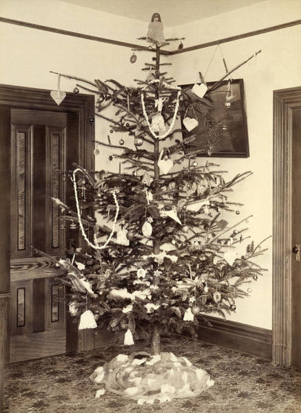1890s Photograph - A Christmas Tree In 1900 by Underwood Archives
