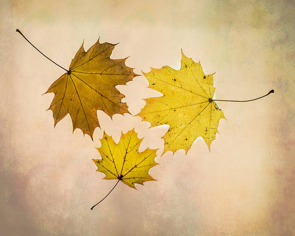Photograph - A Circle Of Autumn Leaves by Gary Slawsky