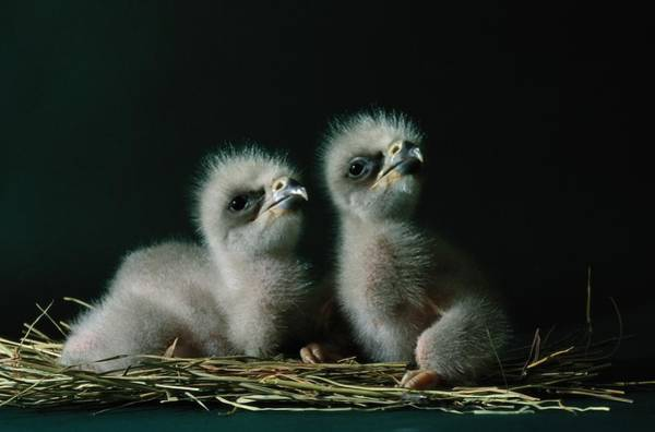 Southwestern United States Photograph - A Close-up Shows Two Southern American by Joel Sartore