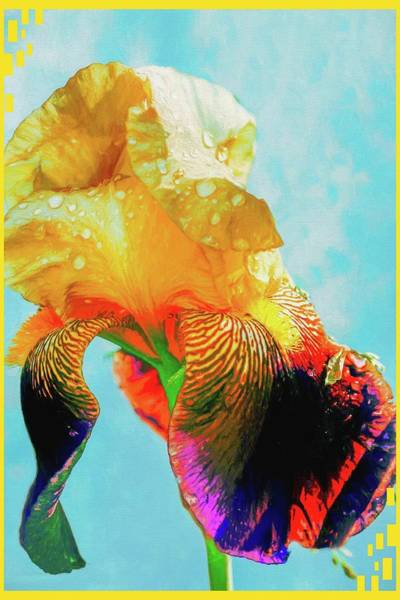 Photograph -   Iris Blossom by Rusty R Smith