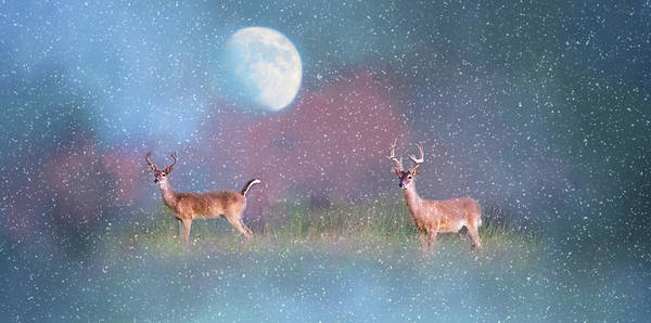 Photograph - A Cold Winter's Night by Lynn Bauer