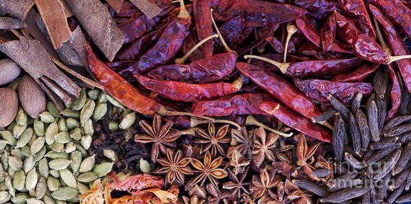 Wall Art - Photograph - A Collection Of Spices by Tim Gainey