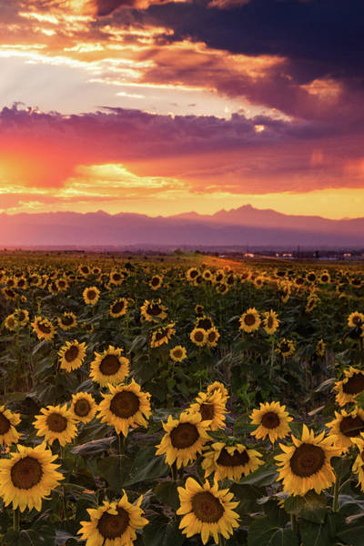 Photograph - A Colorado Evening Sky by John De Bord