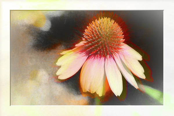 Photograph - A Colorful Coneflower With Bokeh by Natalie Rotman Cote