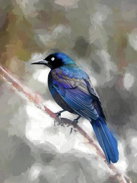 Digital Art - A Common Grackle Perched On A Limb. by Rusty R Smith
