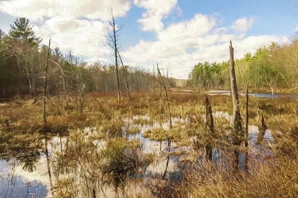 A Connecticut Marsh Art Print