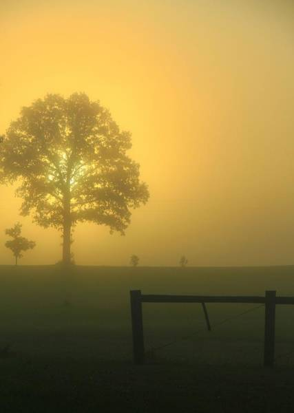 Wall Art - Photograph - A Country Morning by Dan Sproul