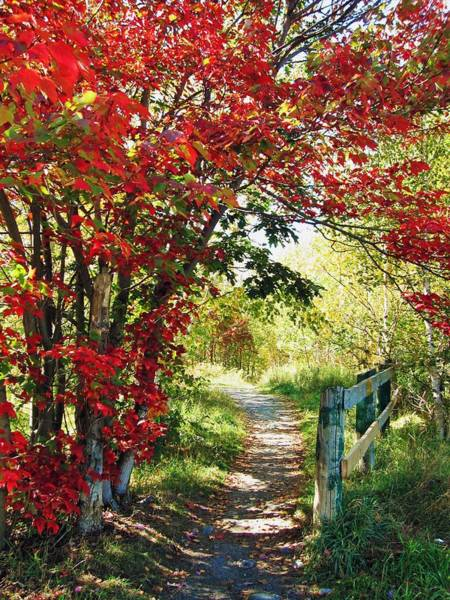 Painting - A Country Path In Autumn by Autumn Scenes