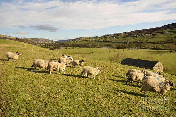 Yorkshire Wall Art - Photograph - A Country Scene by Smart Aviation