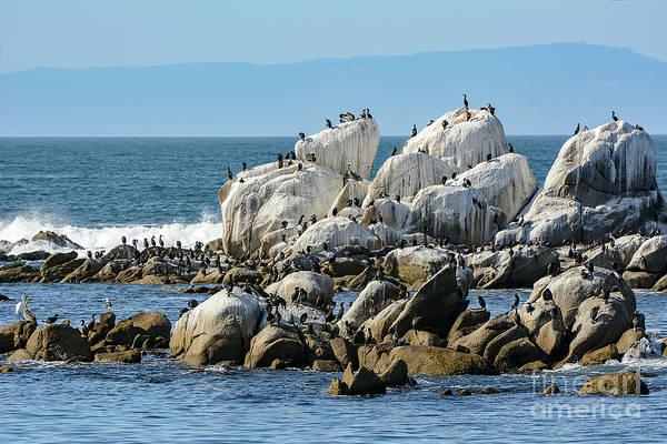 Photograph - A Crowded Bird Rock by Susan Wiedmann