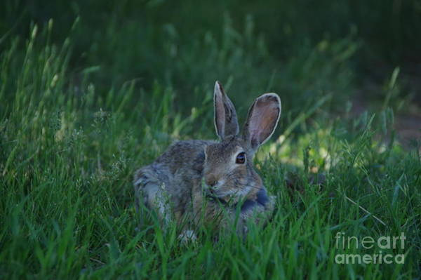 Wall Art - Photograph - A Cute Bunny by Jeff Swan