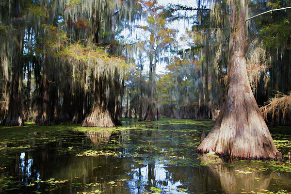 Wall Art - Photograph - A Cypress Swamp by Lana Trussell