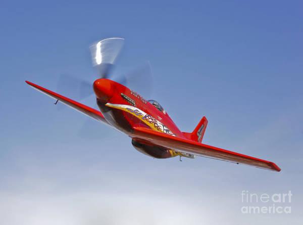 Photograph - A Dago Red P-51g Mustang In Flight by Scott Germain