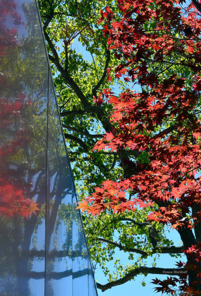 Wall Art - Photograph - A Day Of Reflection by Donna Blackhall