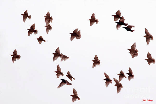 Photograph - A Day With The Birds by Blake Richards