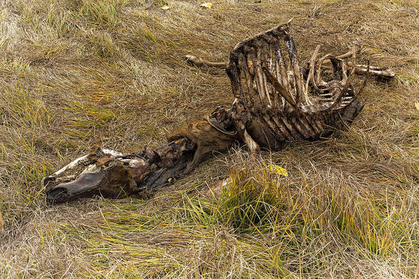Photograph - A Death In The Natural World by Belinda Greb