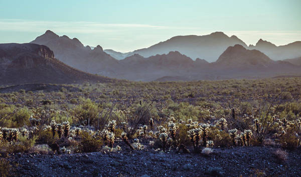 Photograph - A Desert Morning by Margaret Pitcher