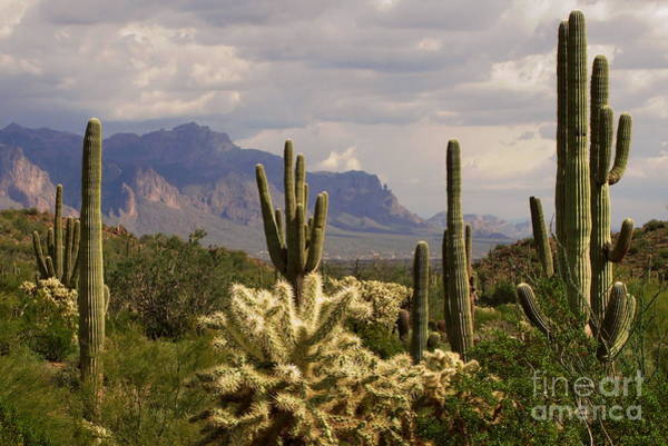 Superstition Mountains Photograph - A Diamond In The Rough by Marilyn Smith