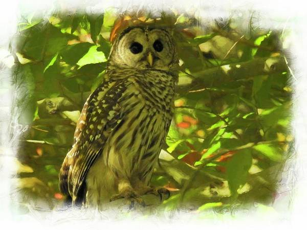 Photograph - A Digital Art Photograph Of A  Barred Owl Strix Varia  Pearched  by Rusty R Smith