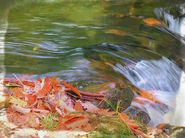 Photograph -  Flowing Water Fall Leaves Closeup by Rusty R Smith