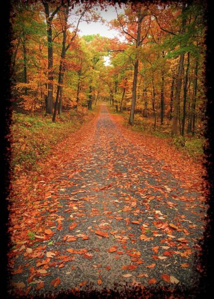 Photograph -   Gravel Road Running Through A Fall by Rusty R Smith