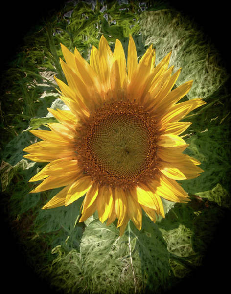 Photograph -  Single Sun Flower Blossom,  by Rusty R Smith