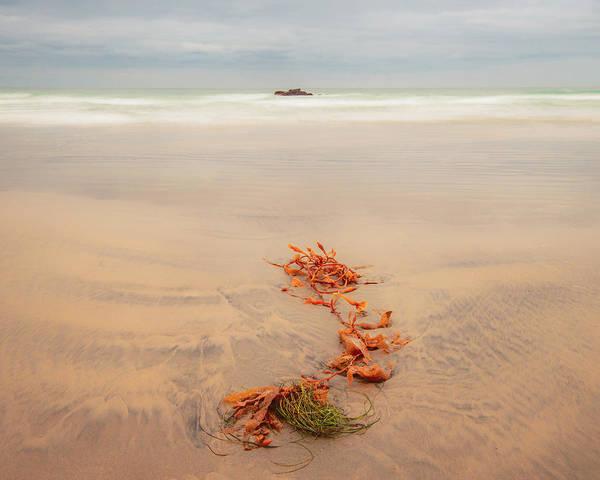 Kelp Photograph - A Distant Memory by Joseph Smith