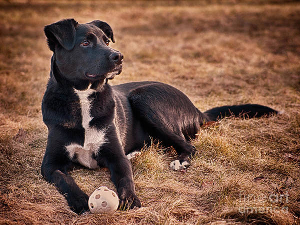 Photograph - A Dog And His Ball by Mark Miller