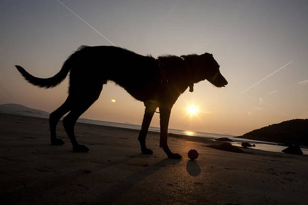 Wall Art - Photograph - A Dog With His Ball At Sunset by Paul Quayle