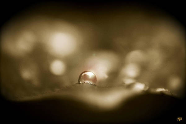 Photograph - A Drop Of Sunlight by John Meader