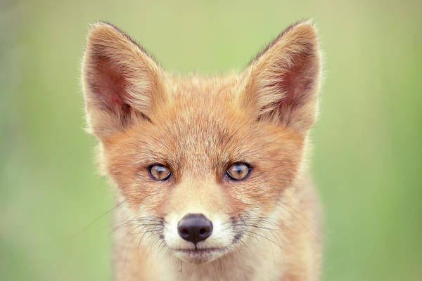 Wall Art - Photograph - A Face Not Only A Mother Could Love by Roeselien Raimond