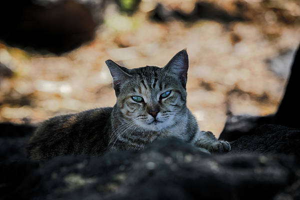 Photograph - A Face Of Contentment by Susan Rissi Tregoning