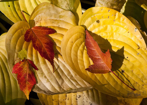 Photograph - A Fall Contrast by Tom Potter