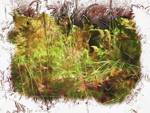 Photograph - A Fall Still Life Of Ferns,grass And Leaves. by Rusty R Smith