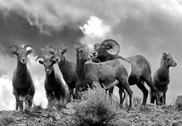 Photograph - A Family Affair by Nicholas Blackwell