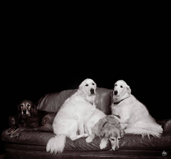 Photograph - A Family Portrait by Wayne King