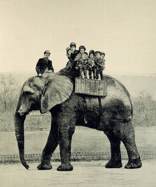 Engraving Drawing - A Farewell Ride On Jumbo From The Illustrated London News by English School