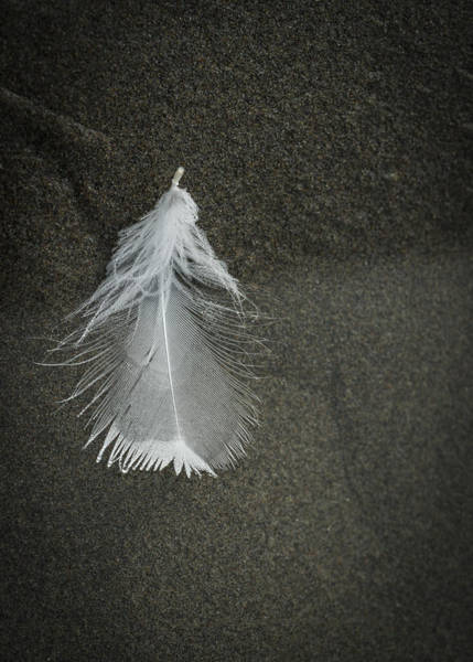 A Feather At The Edge Of The Water Art Print