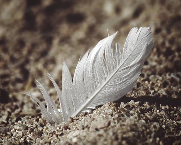 Photograph - A Feather In Time by CE Haynes