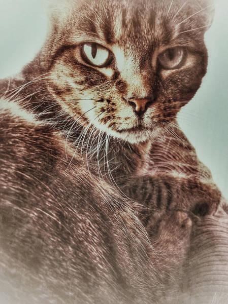 Wall Art - Photograph - A Female Tabby Cat by Tom Gowanlock