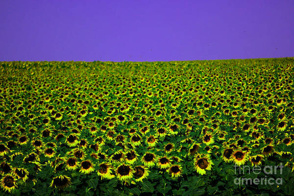 Wall Art - Photograph - A Field Full Of Sunflowers by Jeff Swan