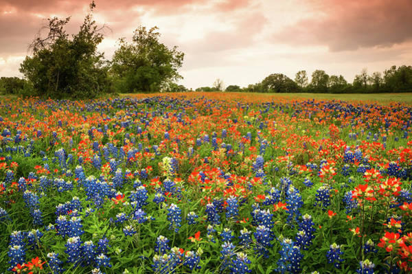 Wall Art - Photograph - A Field Of Bluebonnet And Indian Paintbrush - Wildflower Field In Texas by Ellie Teramoto