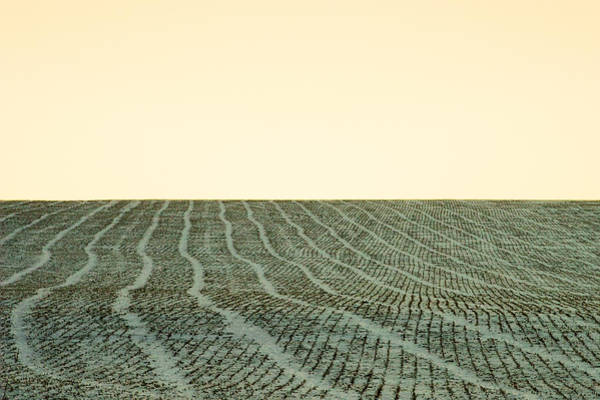 Stalk Photograph - A Field Stitched by Todd Klassy
