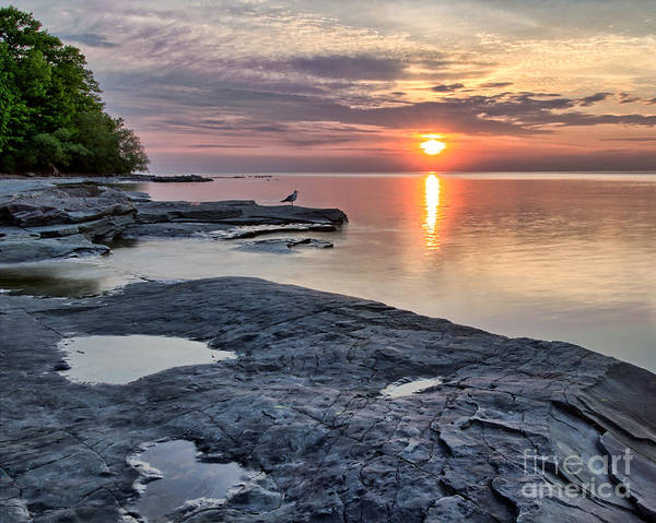 Photograph - A Flat Rock Sunset With Seagull by Rod Best