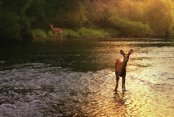 Deer Photograph - A Fleeting Moment by Rob Blair