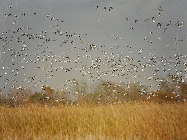 Photograph - A Flock Of Birds II by Charles McKelroy