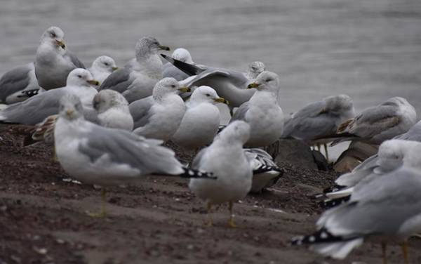 Photograph - A Flock Of Seagulls by Val Arie