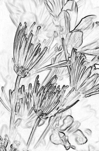 Ink Sketch Photograph - A Flower Sketch by Julie Lueders
