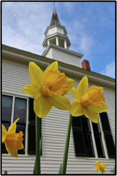 Photograph - A Flowering Congregation by John Meader